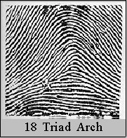 She treats several fingerprints loops double loops concentric whorls spiral whorls that twist clockwise and counterclockwise and two types of tented ...  sc 1 st  Palmistry Hand Analysis Tarot readings in Torquay Devon. & Fingerprints and Palmar Dermatoglyphics by Ed Campbell